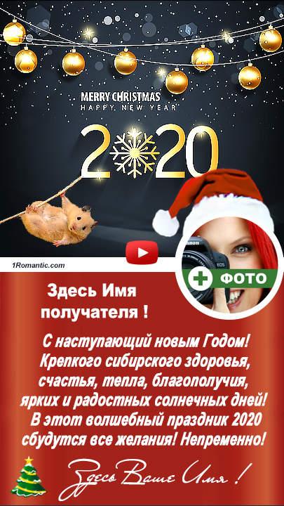 Новый год наглая мышь